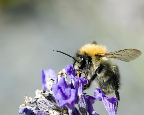 Bee by kip55
