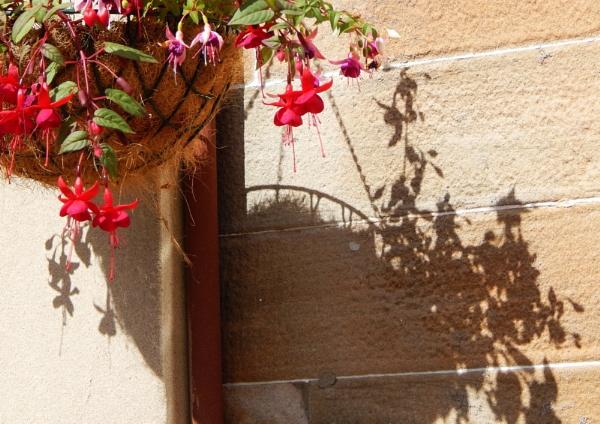 Fuchsias and shadows by digital_boi