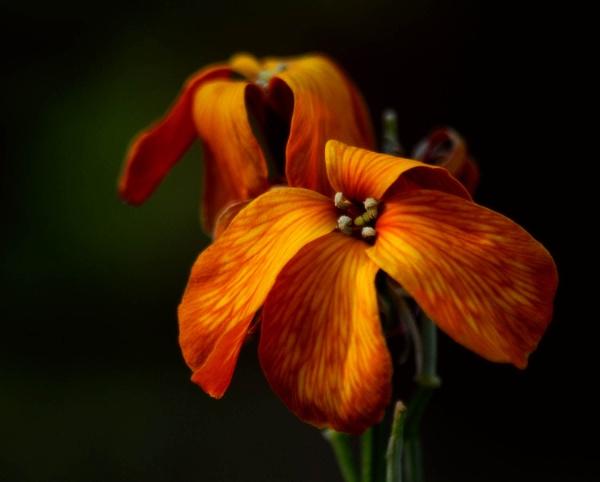 Walflower by viscostatic