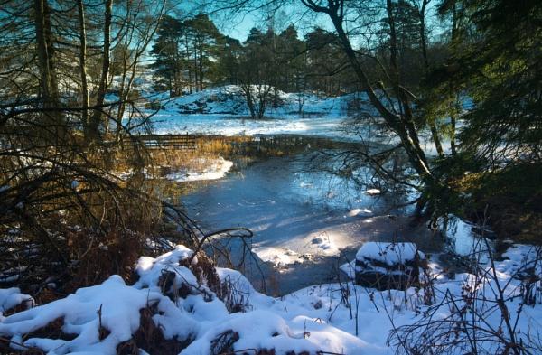 Winter light at Tarn Hows by Brenty