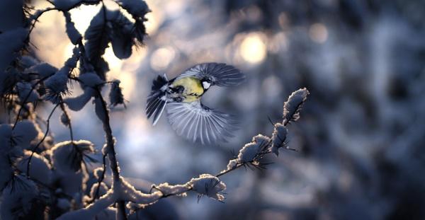 winterday by maratsuikka