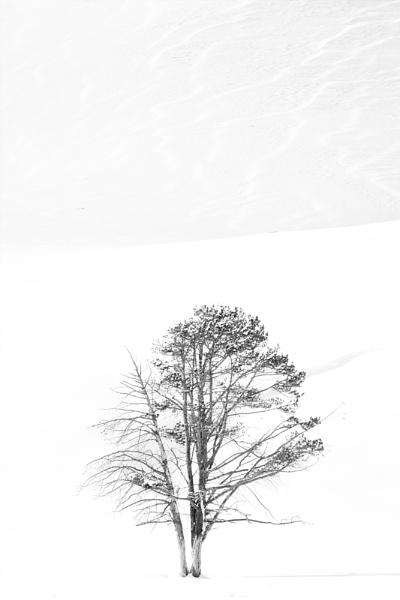 Haydon Valley Oak by rontear