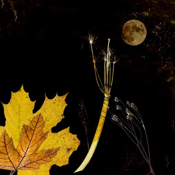 Harvest Moon by Irishkate