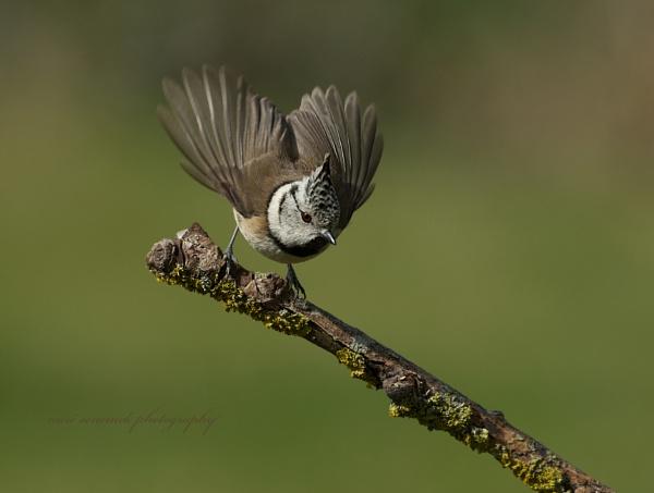 taking off by senn