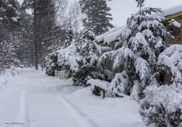 Snowing. by Jukka