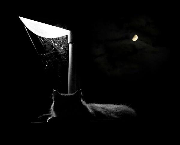 Oscar under the streetlight by colijohn