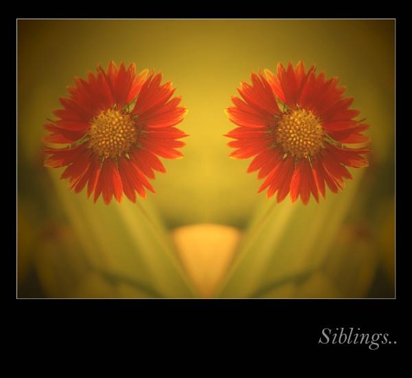 #4 siblings.. by PranavMishra