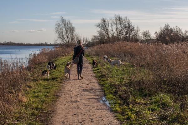 Walking my dogs along the Ol\' Man River by kuipje