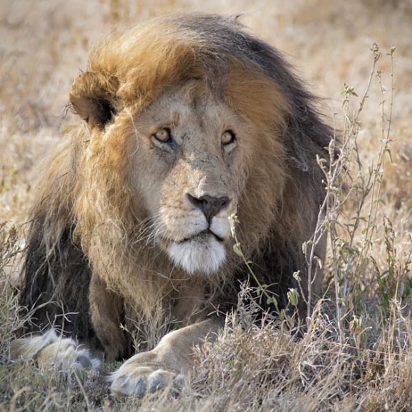Bob of Serengeti by brackley