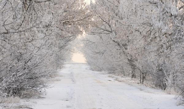through the winter by tutye