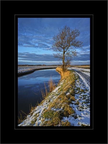 Winter Tree by Rende