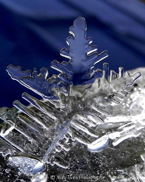 Ice Ice Baby by nickyv32