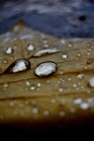 Leaf Drops by Macximilious_XXII
