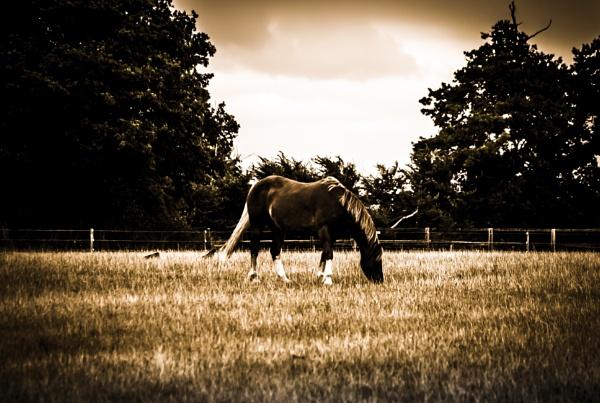 Dark Horse by GeoffDuke