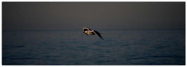 Gull by Regbaron