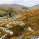 Towards Black Tor, Dartmoor by Bee76