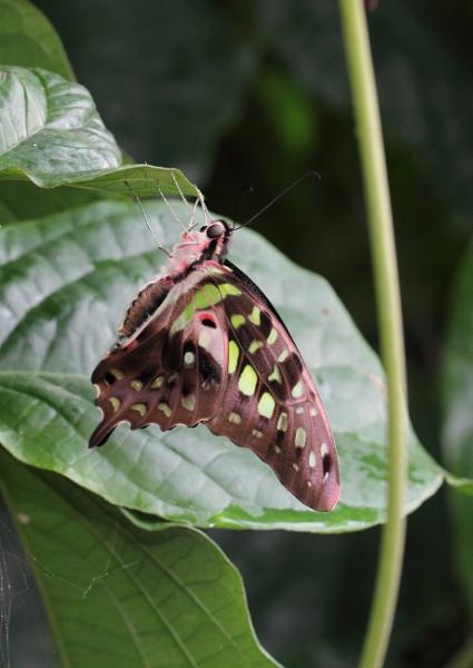Butterfly beauty by vickylou