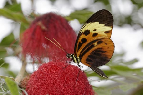 Butterfly by vickylou