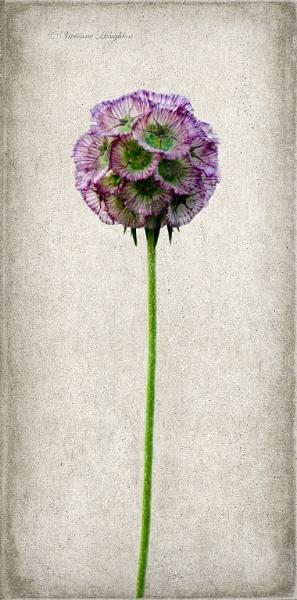 Single flower by vivdy