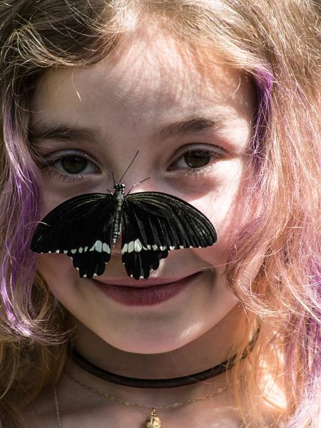 Nosey Butterfly by StrayCat
