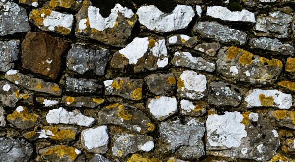 Lichen and Stone by Nikonuser1