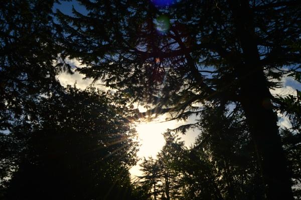 Sun Flares by KatieMariePhotos