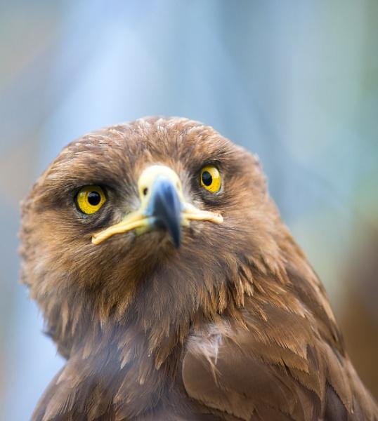 Birds of prey by tutye