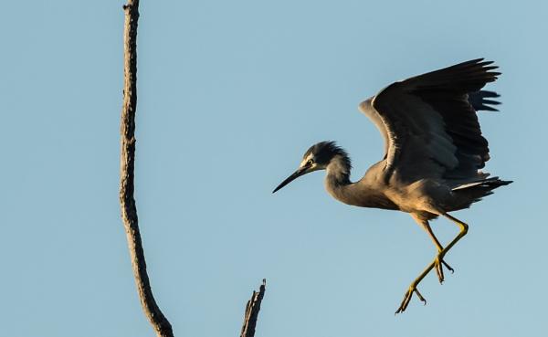 Landing by Heyneker