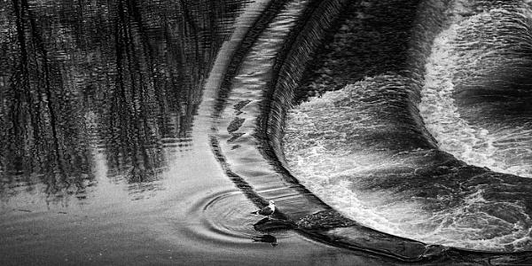 Poultney Weir -mono