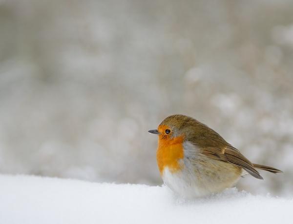 Robin (where`s me legs)