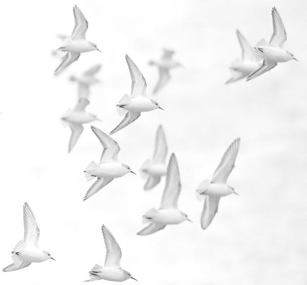 White on White. by 10delboy