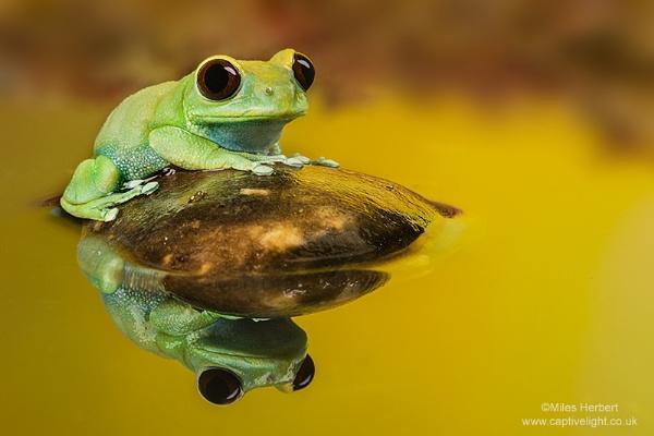 On Golden Pond by Miles Herbert