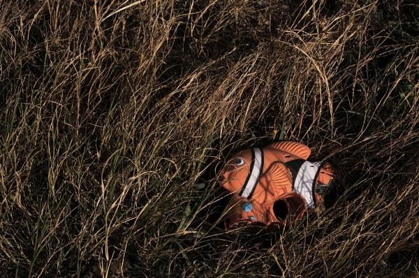 Nemo is found by jdenman