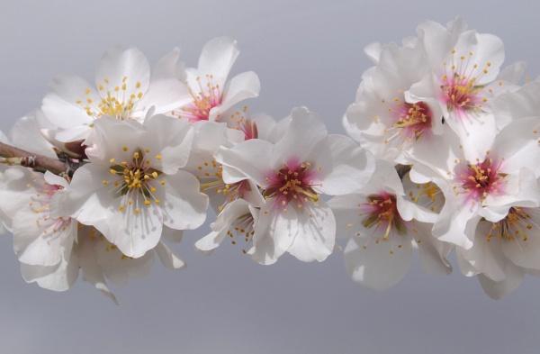 Blossom by jdenman