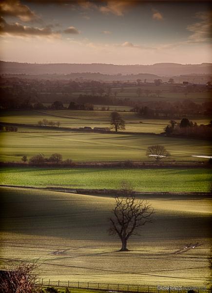Gradation of Fields by sprock