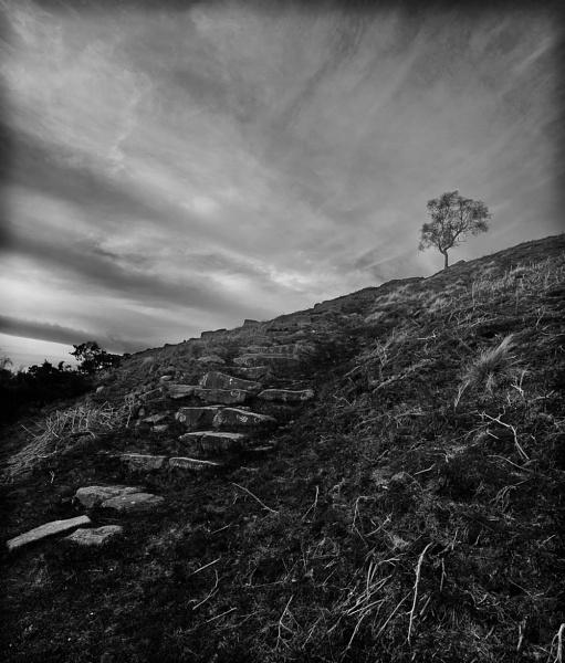 Longshaw Tree by sprock