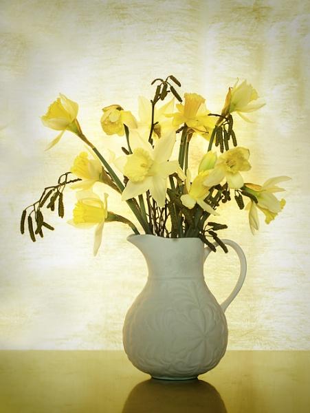 Daffodils & Catkins by Irishkate