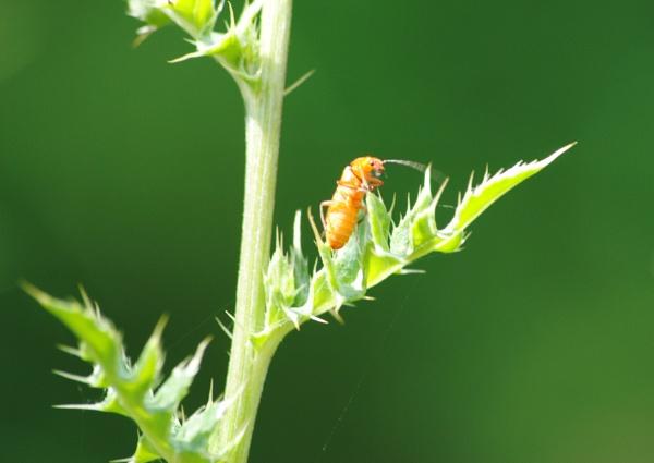 Green Bugged.... by Chinga