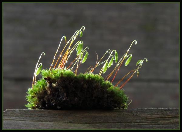 Spagnum Moss by JawDborn