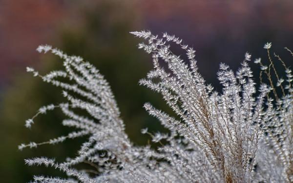 Flora. by Oxygenum
