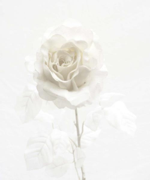 White on White by Alan1297