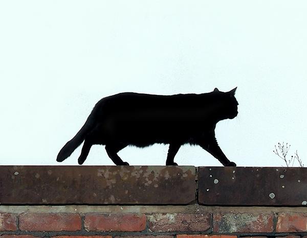 Black cat by victorburnside