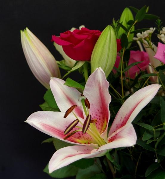 A Few Blooms..... by Mollycat