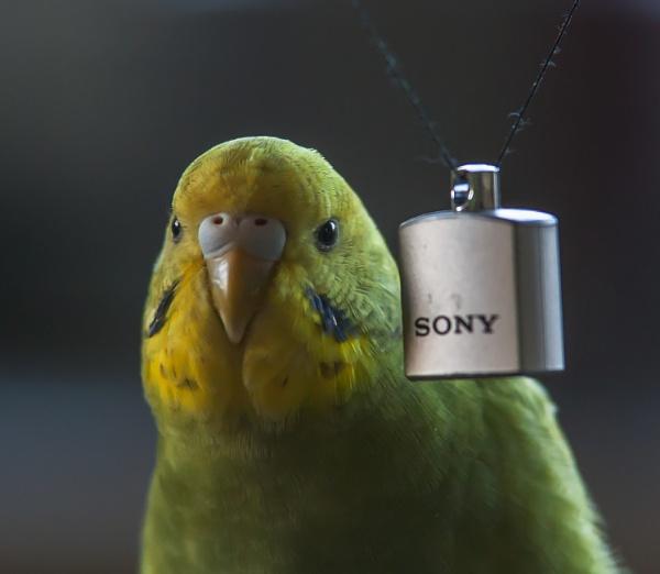 Sony was my first love by kuipje