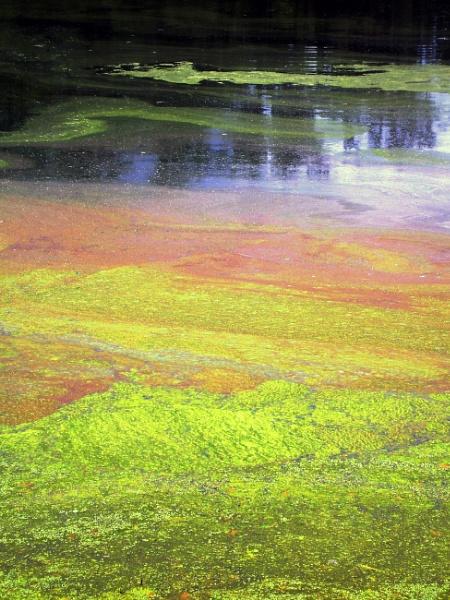 algae moss rainbow by Nesto