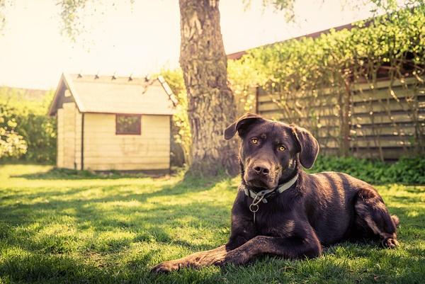 Dog in a garden by Polarpx