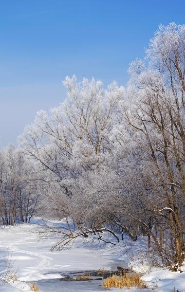 Winter Landscape by PhotoEarl