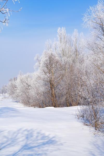 White tale by PhotoEarl