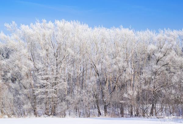 frozen trees by PhotoEarl