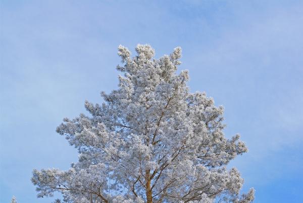 russian sakura by PhotoEarl